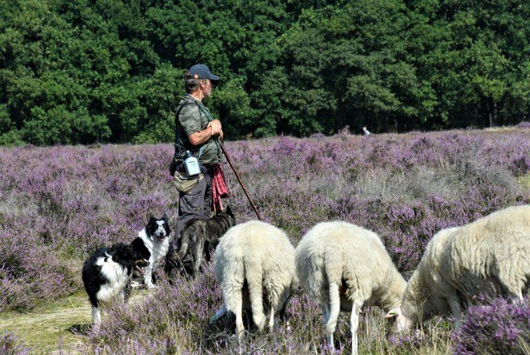 Good Shepherd Sunday
