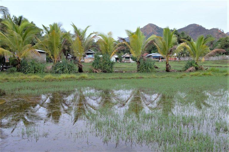 Philippines: Making 'Laudato Si' Work in a Parish Garden