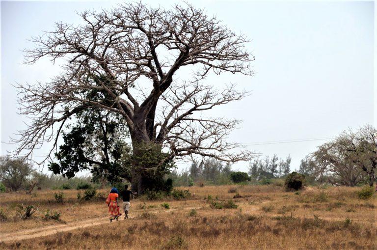 Malindi, Kenya: A Bishop's  Tree Planting Campaign