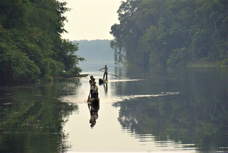 DR Congo: Cardinal Ambongo on Protecting the World's Second Largest Rainforest